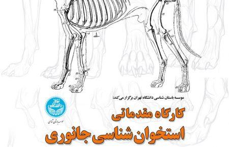 برگزاری کارگاه مقدماتی استخوان شناسی جانوری، در موسسه باستان شناسی دانشگاه تهران